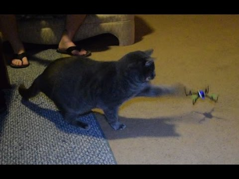 Gatos vs. Drones