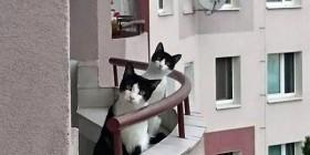 Nuevos vecinos...