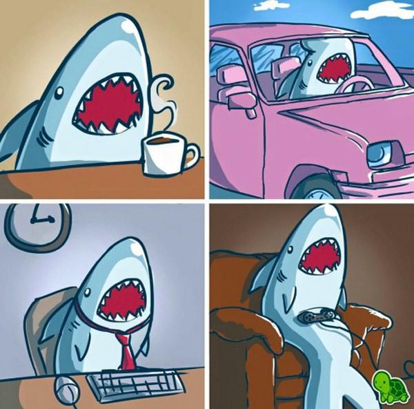 La vida de un tiburón