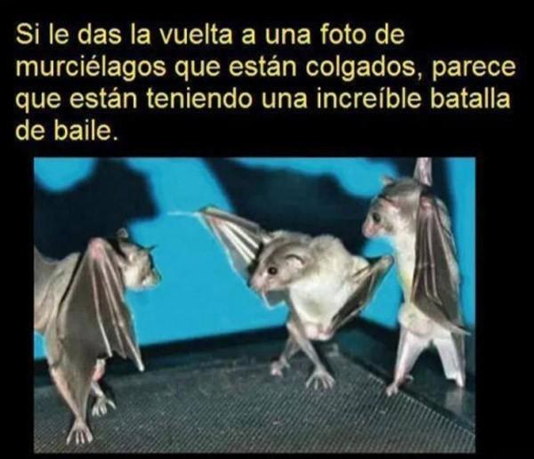 Dar la vuelta a foto de murciélagos