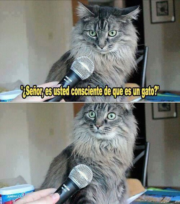Es usted un gato
