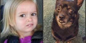Parecidos razonables: Chloe y perrito