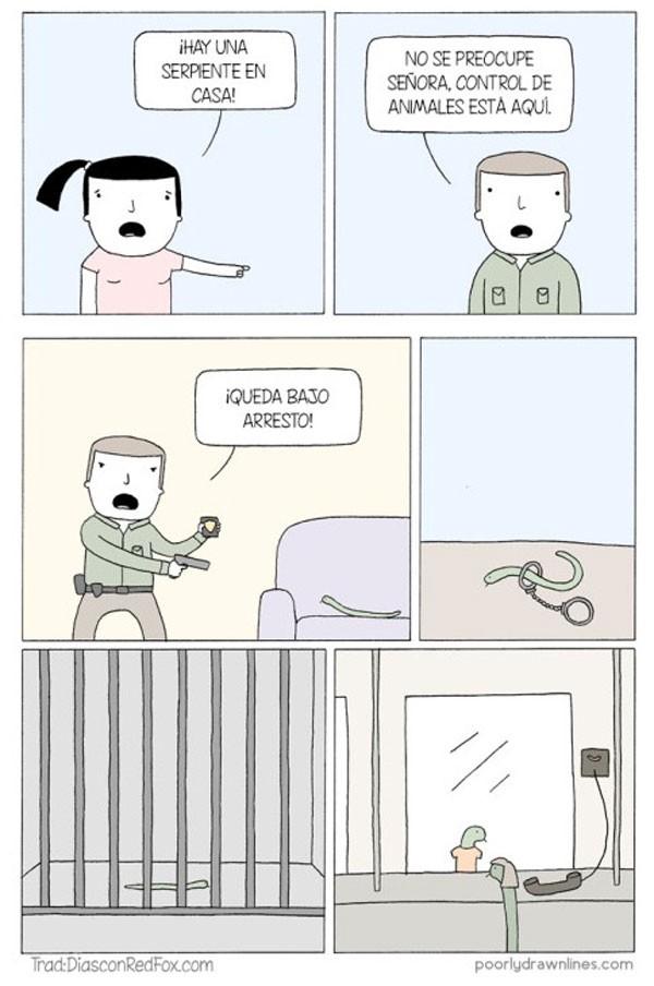 Una serpiente en mi casa