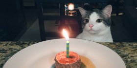 ¡Feliz cumpleaños, gatete!