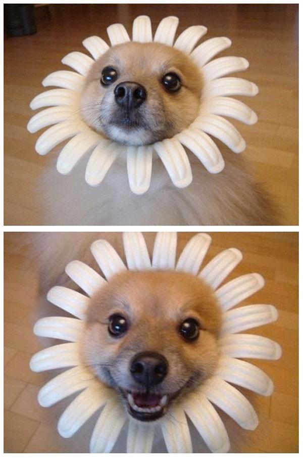 Aquí un perrete feliz