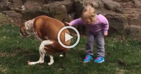 ¿Puedes ver este video más de 10 segundos sin reírte? Apostamos a que no puedes ...